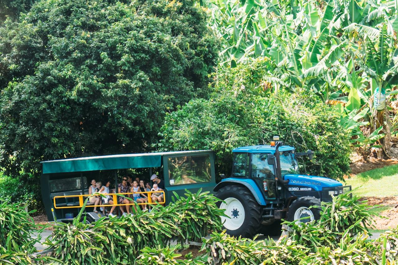 Best Tours and Activities Around The Tweed Coast - Tropical Fruit World